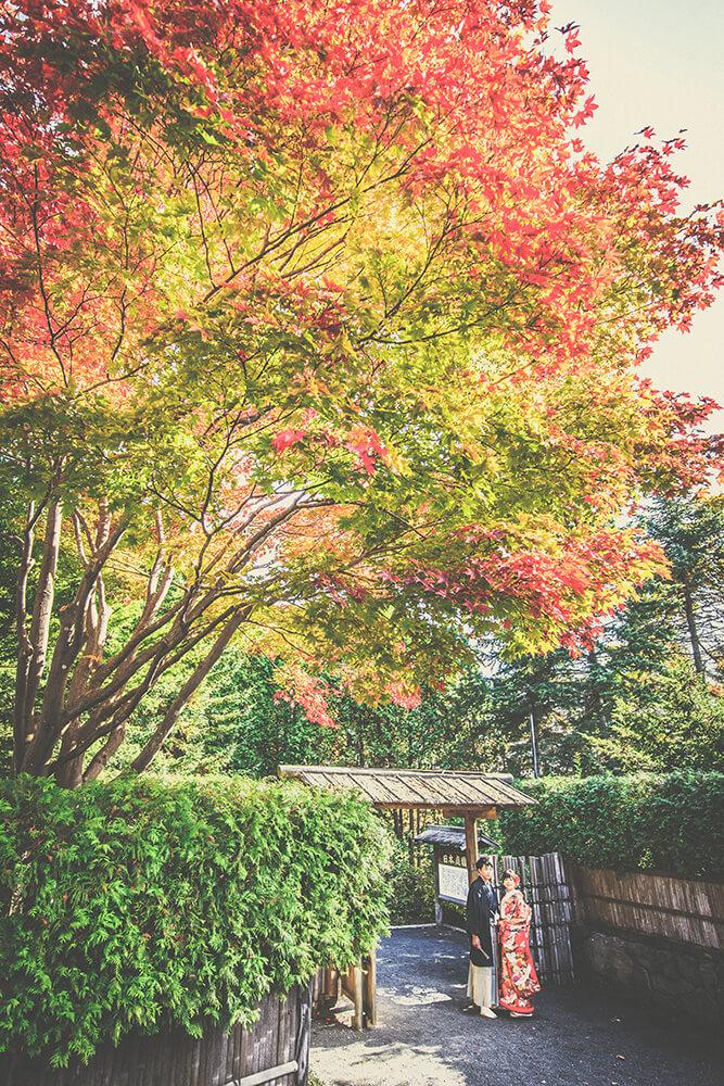 Hokkaido - 雅